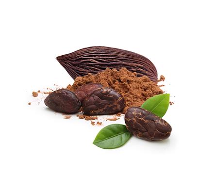 Te acercamos al origen del chocolate