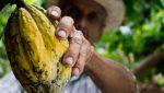 Cacao: elaboración, tipos y chocolate