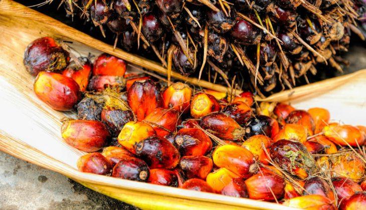 Aceite de palma y chocolate